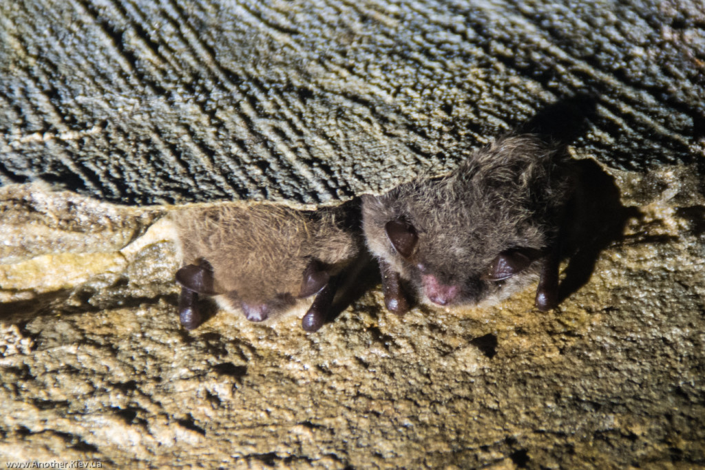 Летучие мыши прячутся в щелях