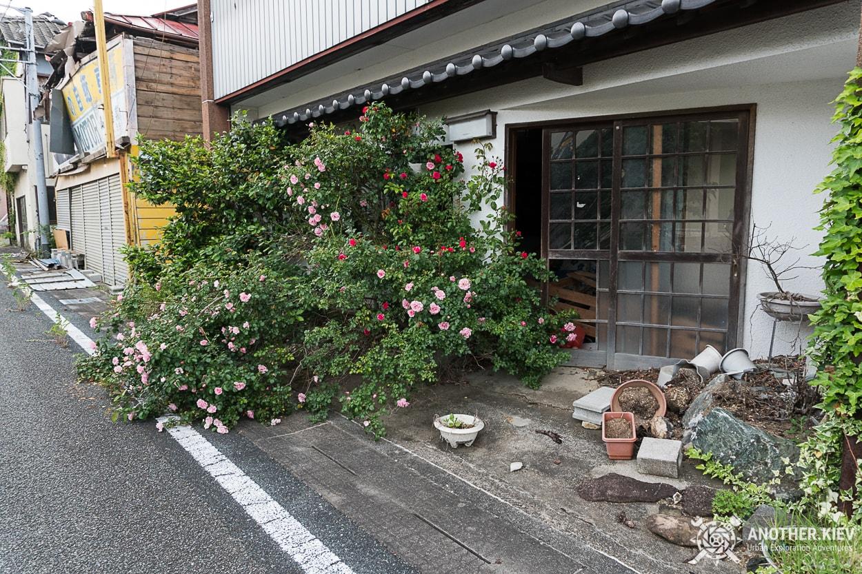 bushes-growing-urbex-fukushima-red-zone Заброшенный мир красной зоны отчуждения АЭС Фукусима-1