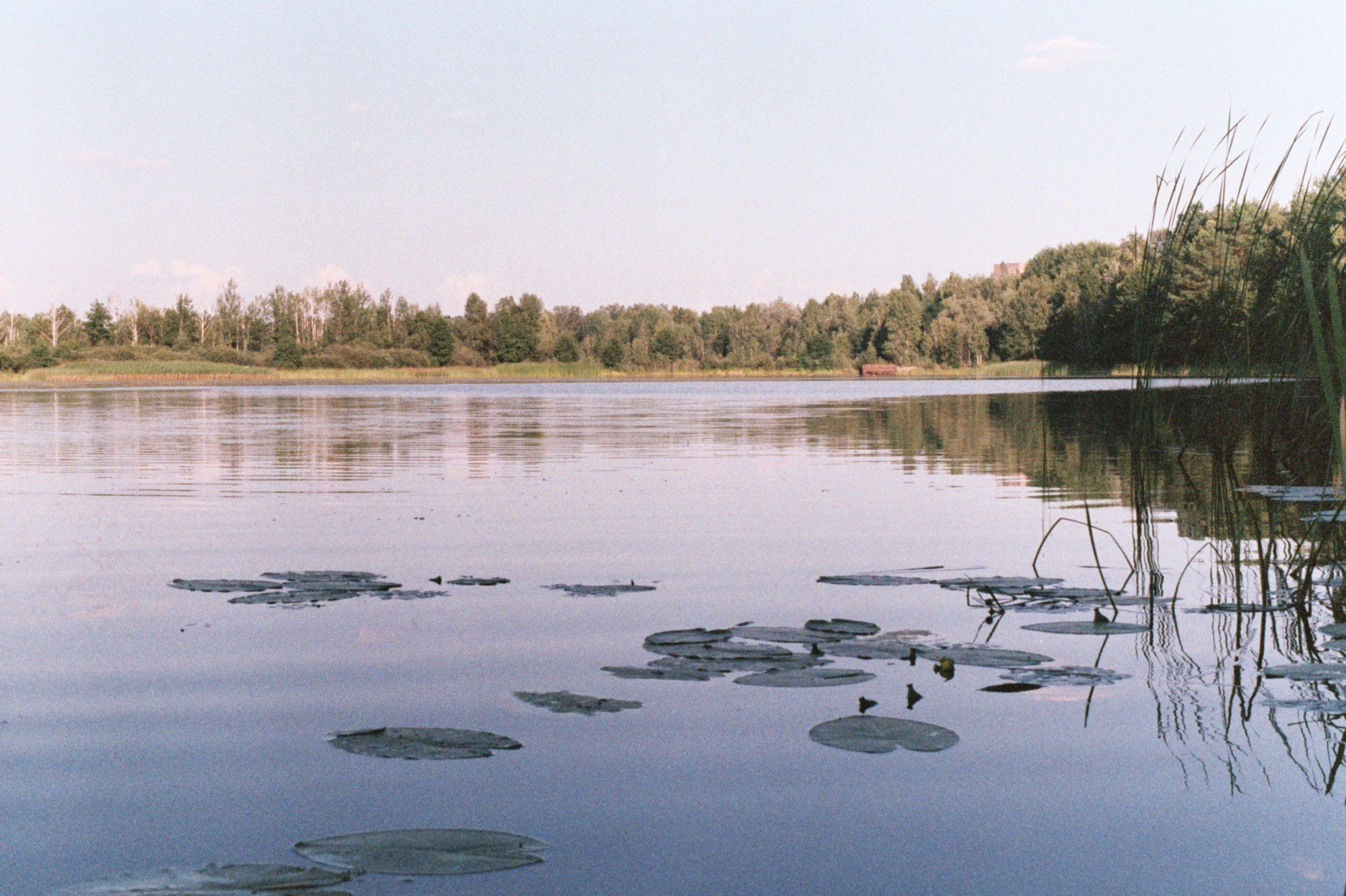 Pripyat river at summer