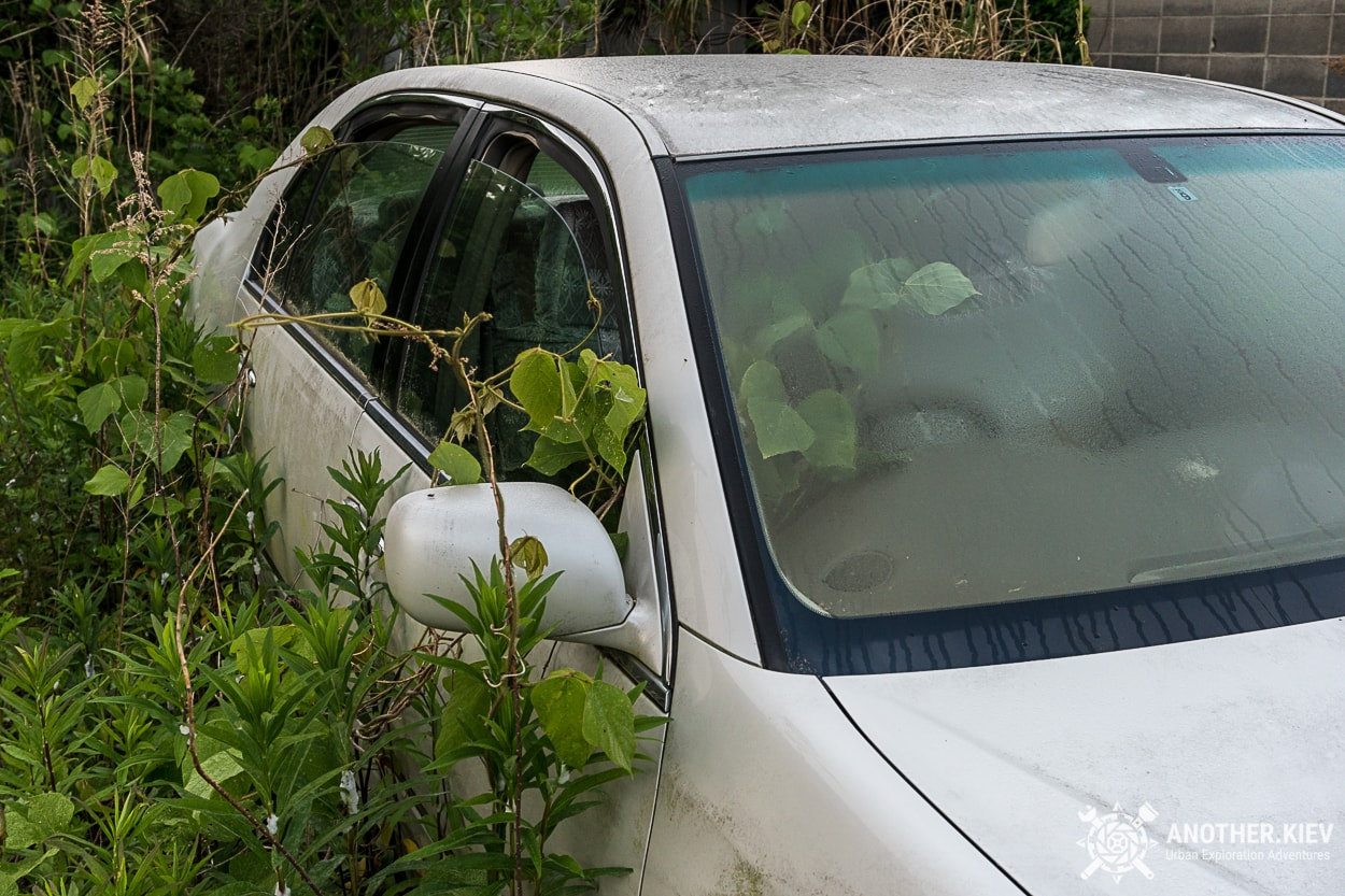 Plants growing inside abandoned cars