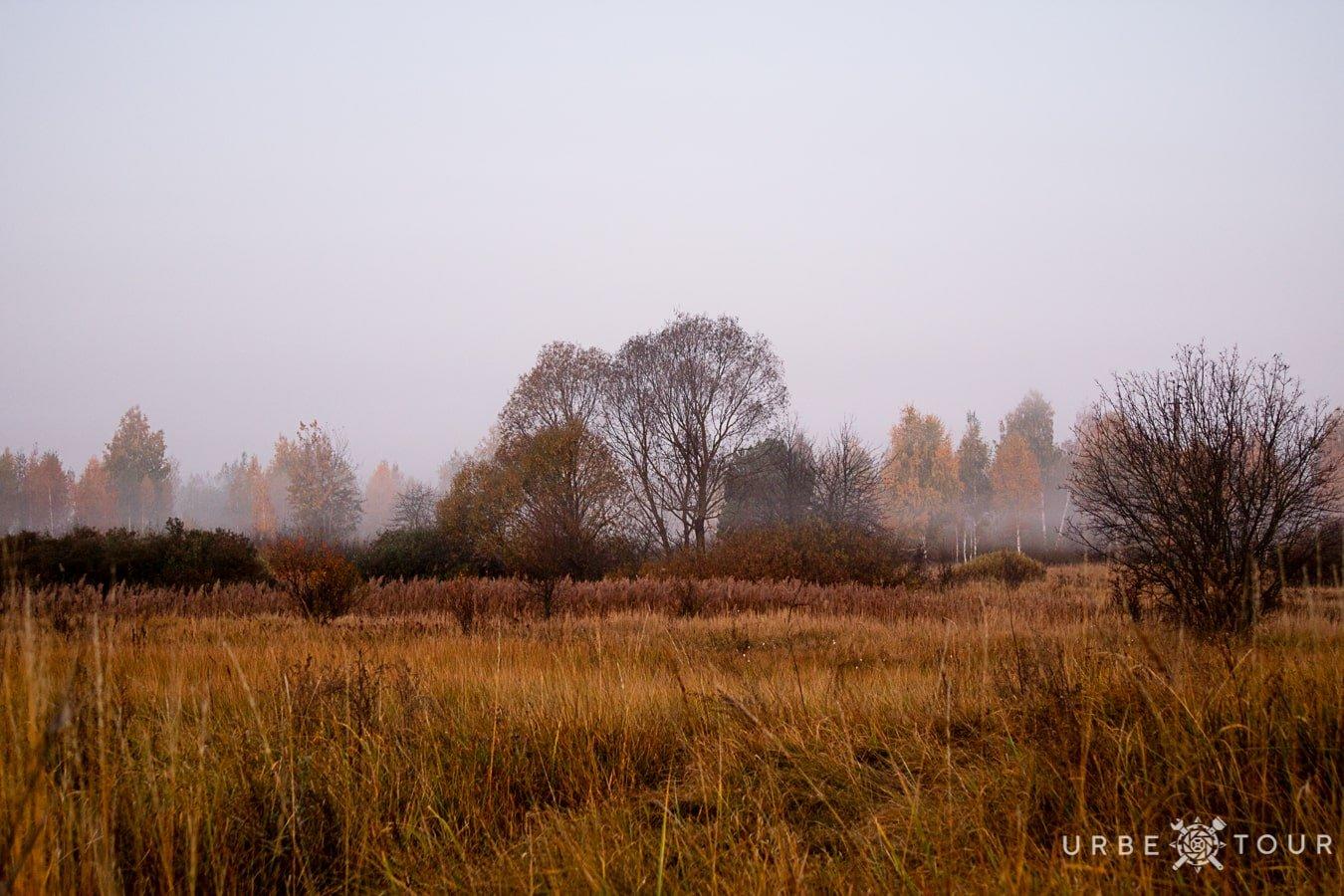 morning field in chernobyl