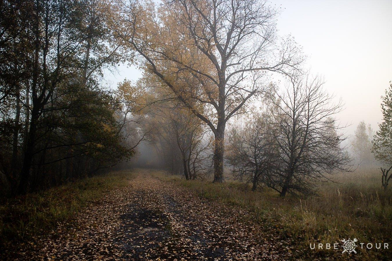 foggy morning in chernobyl zone